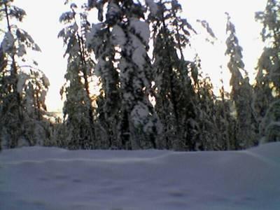 Kävin pikakierroksella katselemassa tunturimaisemia. Puissa oli tänä talvena paljon puhuttua tykkylunta.